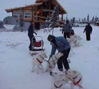 Almost ready to go dog sledding
